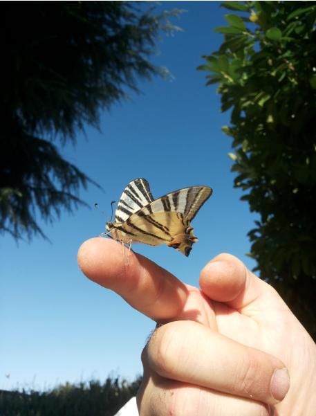 crowdfunding per salvare le farfalle