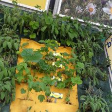 Ricola, con i giardini verticali espone le sue 13 erbe aromatiche in stazione a Milano